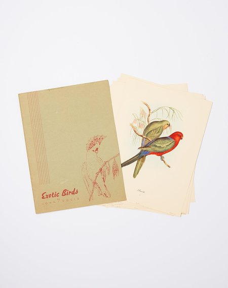 Covet + Lou Vintage Set of Exotic Birds Prints
