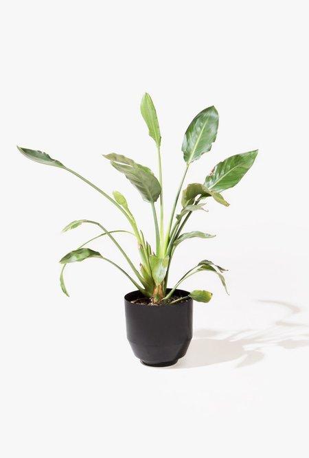 """Yield 8"""" Spun Planter - Black"""