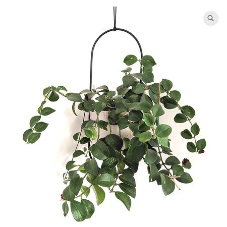 Kord Design Ellipsi hanging planter