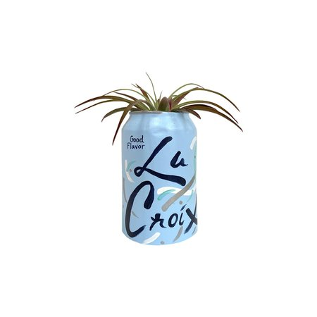 Hello Happy Plants LA CROIX PURE PLANTER
