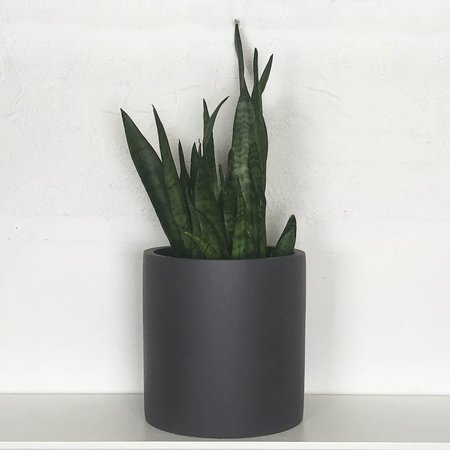 Common House Studio Cylinder Pot