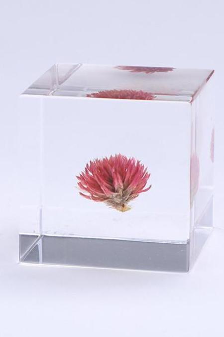 Usagi No Nedoko Sola Cube - Globe Amaranth