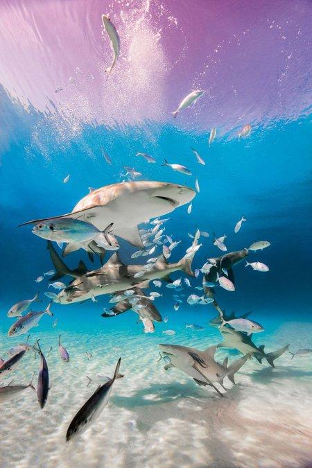 Taschen Sharks: Face-to-face with the ocean's endangered predator
